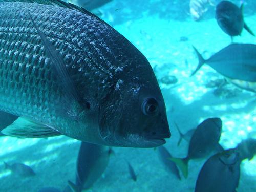 الأسماك في الطبيعة