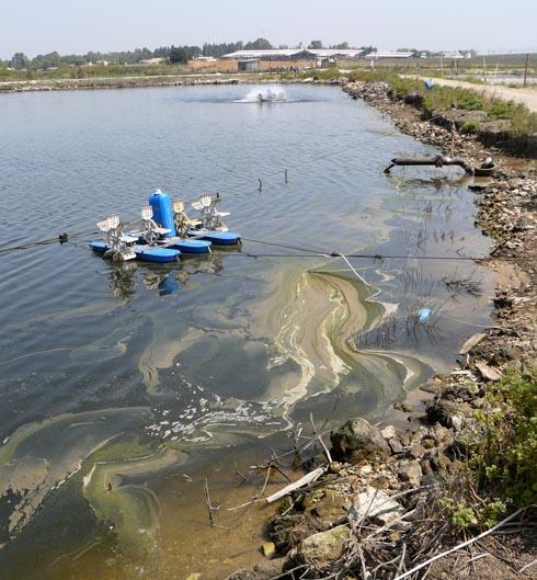 التلوث حول البركة